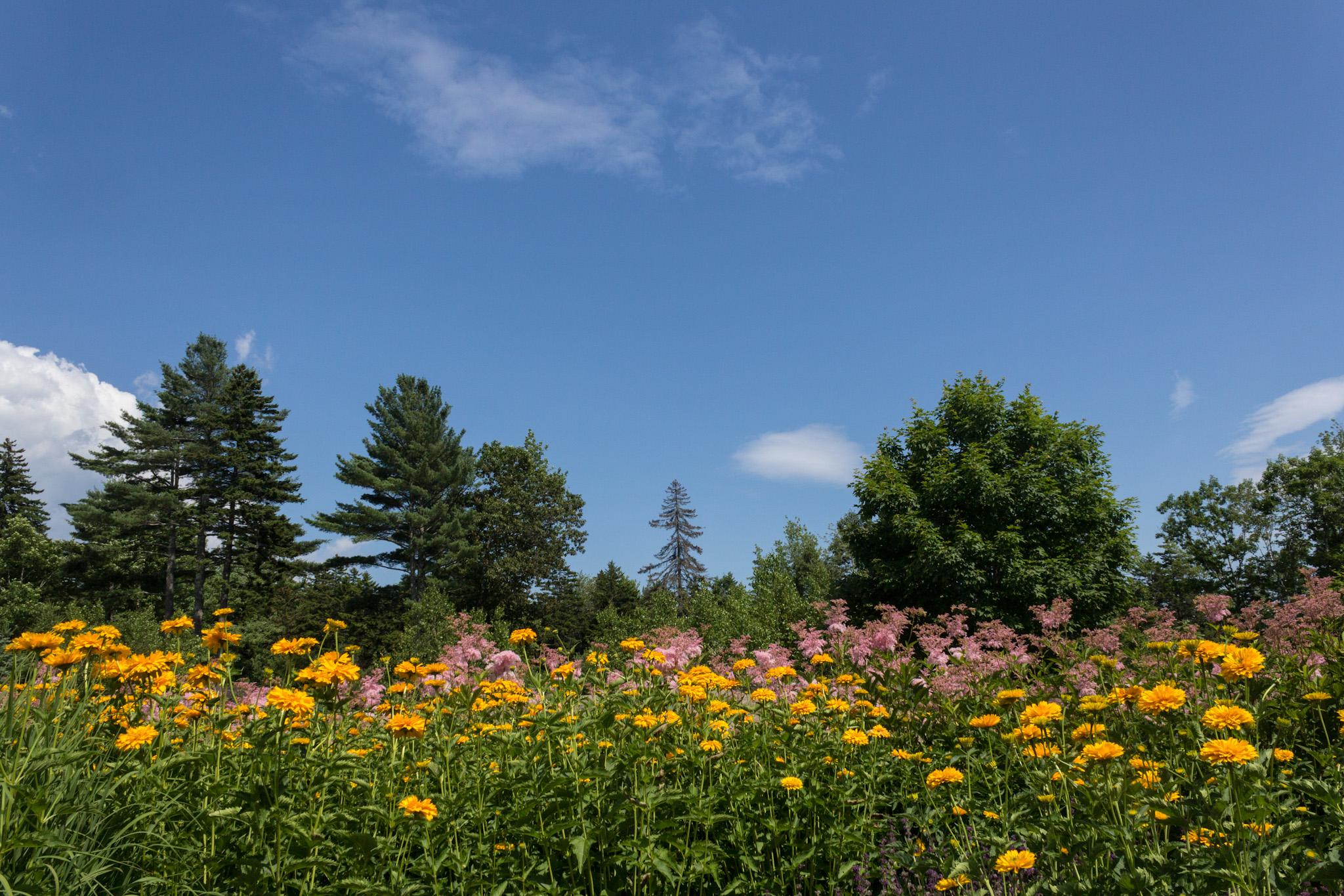 Coastal Maine Botanical Gardens High Strung Loner